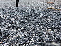 大量水母被冲上海岸 专家称有大事发生