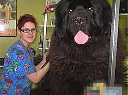 世界最大的宠物 舌头比人的头还大