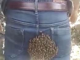 蜜蜂在小伙臀部筑巢 网友看完笑抽了