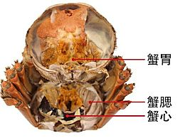 图解去除蟹胃蟹心 螃蟹内脏蟹胃蟹心在哪个部位图解