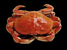 螃蟹不能吃的部位图解 螃蟹哪里不能吃图解什么地方不能吃