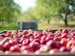吃什么水果减肥快?10种越吃越瘦的水果推荐