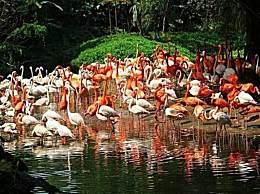 国内知名的野生动物园有哪些?全国野生动物园排名