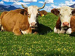 牛肉那个部位最好吃?牛肉各个部位吃法介绍
