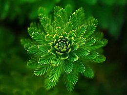 多看绿色可以缓解眼部疲劳吗?生活中如何缓解眼部疲劳