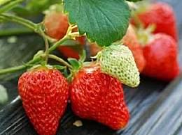 盘点上虞特色水果 你吃过几种?