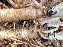 沙参怎么吃营养价值更高?沙参的功效与作用有哪些