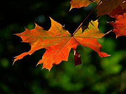 描写秋天的成语有哪些?形容秋天的四字成语