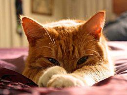 猫咪在主人身上踩奶代表什么?猫咪为什么会有踩奶行为