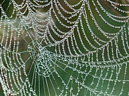 蜘蛛网是蜘蛛的窝吗?蜘蛛的网会粘住自己吗