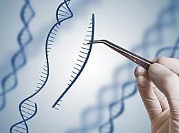 基因编辑是什么?基因编辑未来的发展前景如何?