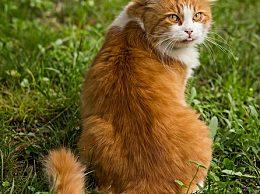猫为什么会把拉的屎埋起来?猫咪埋屎的习惯是怎么养成的