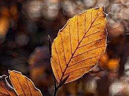 秋季饮食要注意什么?秋季饮食注意事项
