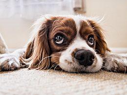 怎么训练狗狗大小便?训练狗狗大小便困难吗