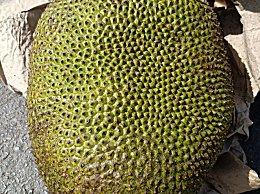 女人吃波罗蜜有什么好处?菠萝蜜含糖量高哪些人不能吃