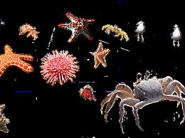 """吃海胆有什么好处?海胆被称为""""珍贵的中药材"""""""