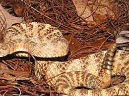 世界上最毒的蛇是什么蛇 全球10大最毒毒蛇排行榜!