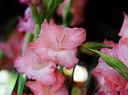 教师节给老师送什么花最好?7种适合献给老师的鲜花