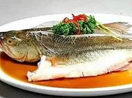 鲈鱼是淡水鱼还是海水鱼 鲈鱼科普汇总