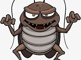 家里有蟑螂怎么办?如何有效的消灭蟑螂