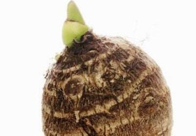 芋头发芽还能吃吗 芋头有哪些好处与左右