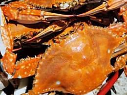 螃蟹怎么分公母 挑螃蟹方法窍门大全