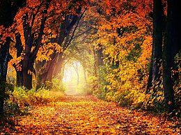 描写秋天的古诗句有哪些
