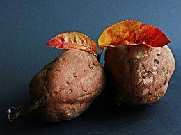白露节气为什么要吃番薯?哪些人不适宜吃红薯?