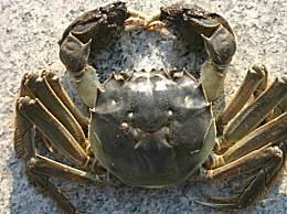 螃蟹属于大寒食物吗?吃螃蟹这些禁忌千万别忘