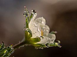 白露节气下雨有什么寓意?白露指的是什么?