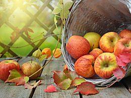 早上空腹吃苹果好吗?吃完海鲜能吃苹果吗