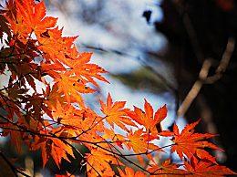 秋季登山有哪些注意事项?多数树叶为什么会在秋天变色