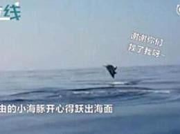 海豚跃出水面道谢 暖心一幕感动无数人