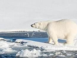 地球好日子剩11年 人类未来生存环境恶化岌岌可危