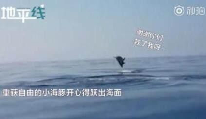 海豚跃出水面道谢怎么回事 海豚跃出水面道谢事件始末