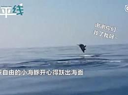 海豚妈妈跃出水面道谢 海豚被渔网缠住该怎么办