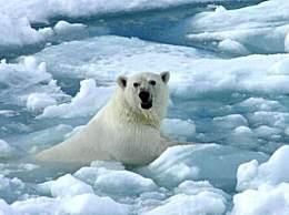 地球好日子剩11年 全球变暖加剧气候不受控制