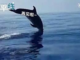 海豚妈妈跃出水面道谢 暖心一幕被网友点赞