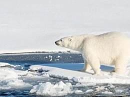 地球好日子剩11年 人类即将迎来毁灭性气候