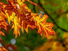 秋分节气有哪些气候特点