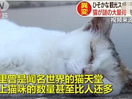 日本猫岛遭人恶意投放毒鱼 致70只猫咪死亡
