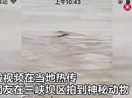 专家分析三峡神秘水怪 水蛇的可能性极大