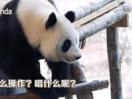 芬兰动物园给熊猫过中秋 齐唱中文歌也是有心了
