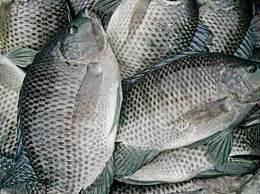 哪种鱼鱼刺比较少适合清蒸?这些鱼最适合给宝宝吃