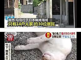 猫岛遭人恶意投放毒鱼 70只猫咪死亡令人气愤