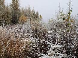 漠河首场降雪来袭 竟比去年提前25天