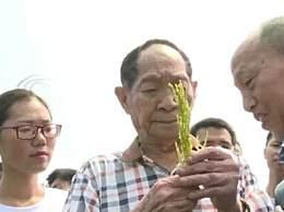 袁隆平获奖当天还在田间 袁老被赞国家的脊梁