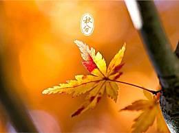 秋分是什么意思?今年秋分节气是几月几日?