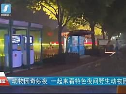 上海野生动物园适合带孩子去吗?门票多少钱?