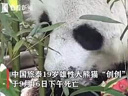 旅泰大熊猫创创疑似噎死 死因有待调查